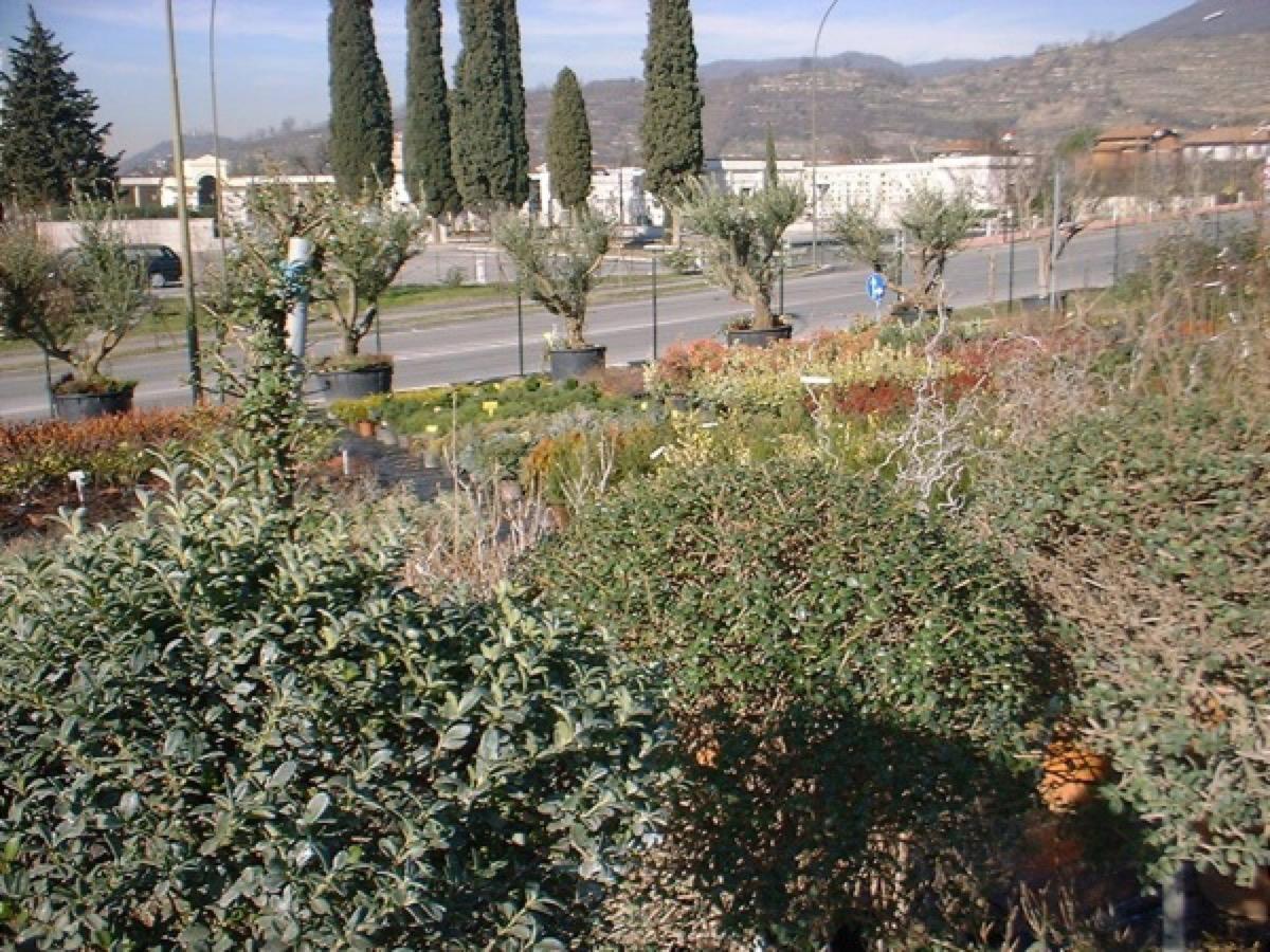 brescia progettazione giardini realizzazione giardini