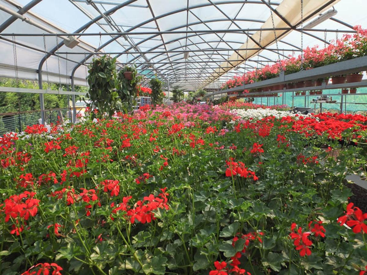 Brescia progettazione giardini realizzazione giardini for Vivai a pistoia