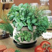 Coltivare le erbe aromatiche in vaso puoi farlo anche in casa progettazione giardini - Coltivare piante aromatiche in casa ...