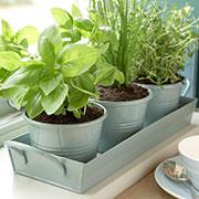 Coltivare le erbe aromatiche in vaso puoi farlo anche in for Erbe aromatiche in vaso