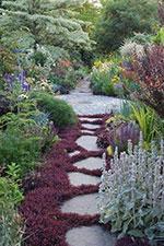 Fiori perenni: per avere un balcone o un giardino fiorito tutto l ...