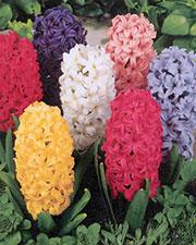 Il giardino romantico scopri quali fiori sono pi in for Donare un giardiniere