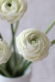 Il giardino romantico scopri quali fiori sono pi in for Nomi di fiori bianchi