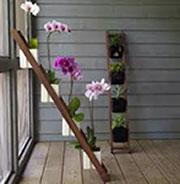 Arredare con le piante tante idee per una casa green e for Posso permettermi di costruire una nuova casa