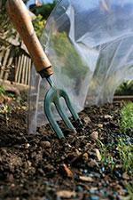 Curare il giardino in inverno cosa fare a dicembre per for Cosa piantare a dicembre