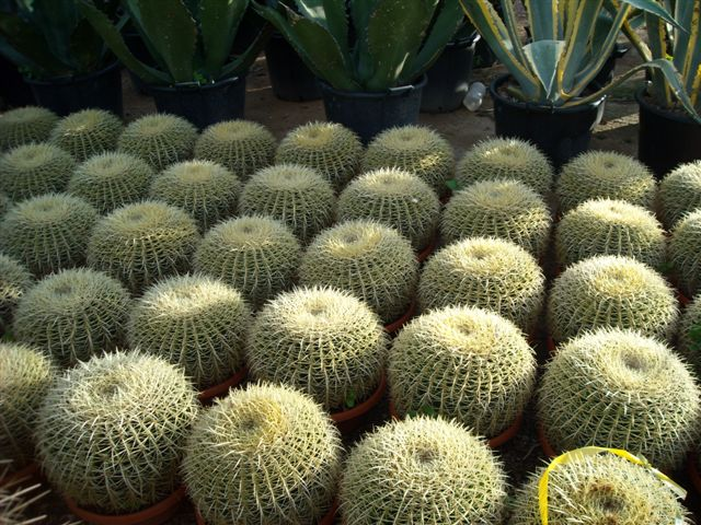 Vivai loda come proteggere le piante grasse da freddo e gelo durante l 39 - Piante grasse da esterno in inverno ...